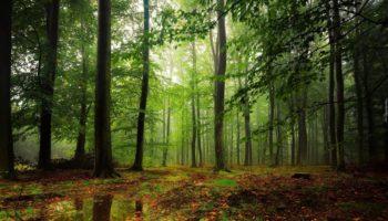 W Polsce jak w lesie?